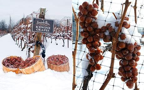 p_snow-ice-wine_1567695c